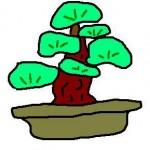 盆栽 150x150 竹俣紅はかわいい女流棋士 自作で棋士写真を編集!ツイッターある?